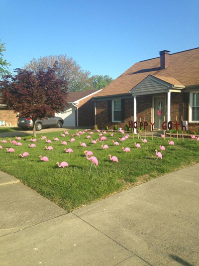 Flamingo Flocked Yard Filled with Pink Flamingos